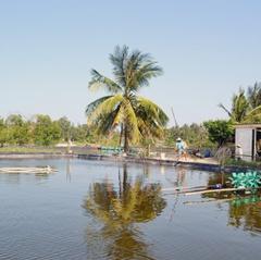 Quảng Nam: Sẽ thu hẹp diện tích nuôi tôm trên cát không hiệu quả