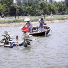 Quảng Trị: Phát triển nuôi tôm chưa tương xứng vì thiếu đầu tư