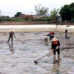 Nhiều thách thức cho nuôi tôm nước lợ Thái Bình