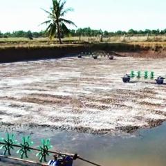Vĩnh Châu sẽ thả nuôi tôm nước lợ trên diện tích 24.000 ha