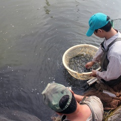 Hướng dẫn thực hiện các quy định về sản xuất, ương dưỡng giống thủy sản
