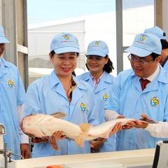 """Sẽ có nhiều hơn một """"đối thủ"""" cạnh tranh với cá tra Việt Nam"""
