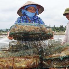 Quảng Ninh: Khẳng định vai trò hạt nhân của ngành thủy sản