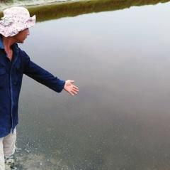 Quang Ngãi: Điêu đứng vì tôm bị dịch