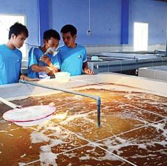Ninh Thuận: Chặng đường 27 năm phát triển nuôi trồng thủy sản