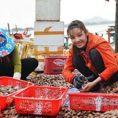 Trúng sò lụa, ngư dân Hà Tĩnh kiếm tiền triệu mỗi ngày