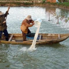Bình Định cần đầu tư cơ sở hạ tầng các vùng nuôi tôm