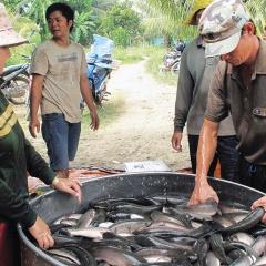 Điểm nghẽn trong xuất khẩu cá nước ngọt
