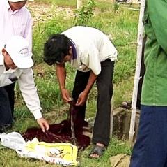 Quảng Trị:  Xuất hiện dịch bệnh hoại tử gan tụy cấp tính trên tôm nuôi