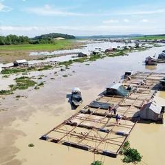 Thống kê: Hơn 338 tấn cá bè ở sông La Ngà bị chết