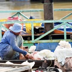 Người nuôi cá nên tuân thủ khuyến cáo của nhà chuyên môn
