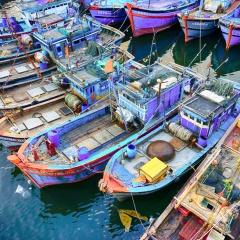 57 cảng cá được chỉ định xác nhận nguồn gốc thủy sản