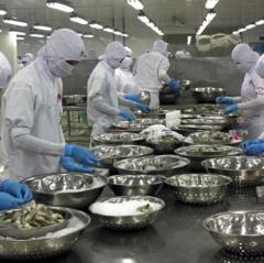 Tận dụng FTA, tôm Việt Nam tăng xuất khẩu sang Nhật Bản