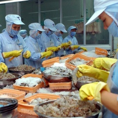 Chile: Thị trường nhỏ nhưng là cơ hội mở cho tôm Việt Nam