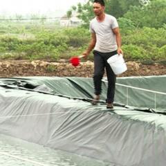 Kim Đông tập trung chống nắng cho con nuôi thủy sản