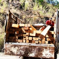 """Khánh Hòa: """"Nóng"""" chuyện gỗ làm lồng nuôi tôm hùm"""