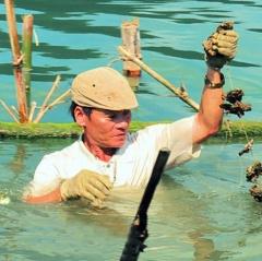 Nuôi hàu - một hướng đi mới ở Cát Khánh