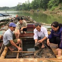 Phòng bệnh cho cá nuôi mùa nắng nóng và thời điểm giao mùa