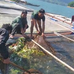 Bảo vệ, tái tạo nguồn lợi thủy sản hồ Hòa Bình