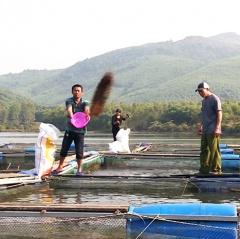 Kỳ Anh: Thu tiền tỷ từ nuôi cá lồng bè trên hồ thủy lợi