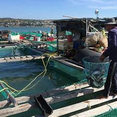 Chưa có quy hoạch nuôi hải sản trên biển Mũi Né