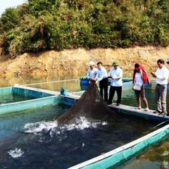Lai Châu: Rót vốn cho mô hình nuôi cá lồng trên lòng hồ Thủy điện