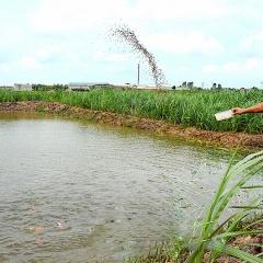 Vụ Bản - Nam Định đẩy mạnh phát triển nuôi thủy sản