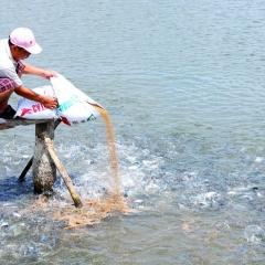 Người nuôi thủy sản lỗ nặng