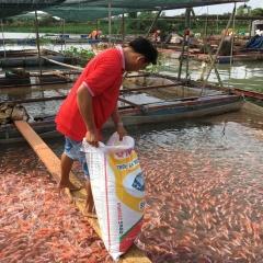 Vĩnh Long phát huy tiềm năng nuôi thủy sản lồng/bè