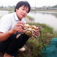 Quỳnh Lưu: Nuôi cua thương phẩm cho hiệu quả kinh tế cao