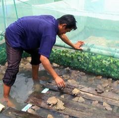 Nuôi ếch xen với cá Đồng Nai