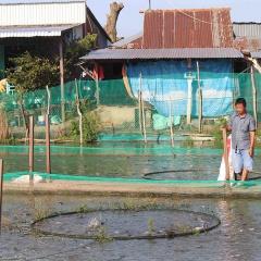 Cảnh báo tình trạng nông dân nuôi cá theo phong trào