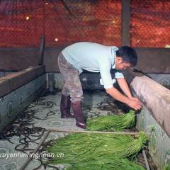 Cử nhân kinh tế về quê nuôi lươn không bùn