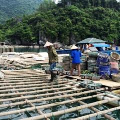 Không cấm nuôi trồng thủy sản trong khu vực Vịnh Hạ Long