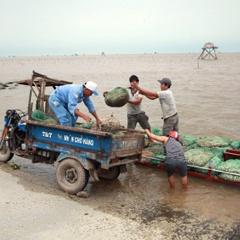 Nuôi trồng thủy sản kết hợp du lịch sinh thái ở vùng bãi bồi