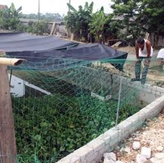 Quỳnh Lưu: thử nghiệm mô hình nuôi cua đồng, ốc bươu đen