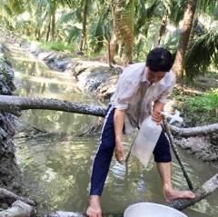 Làm giàu nhờ mô hình nuôi tôm càng xanh trong mương dừa