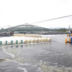 Bước phát triển mới của thủy sản Ninh Bình