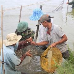 Một số giải pháp để nuôi tôm theo hướng bền vững tại tỉnh Quảng Trị
