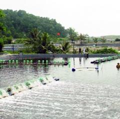 Thanh Hóa: Tập trung chăm sóc thủy sản vụ xuân hè
