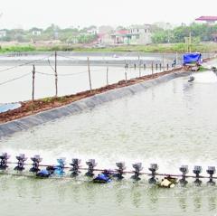 Hậu Lộc: Khai thác và nuôi trồng thủy sản đạt 18.839 tấn