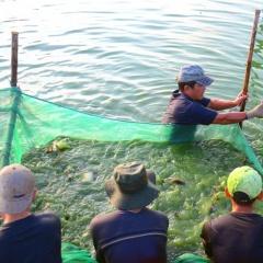 Quản lý chất lượng nước trong ao nuôi cá nước ngọt