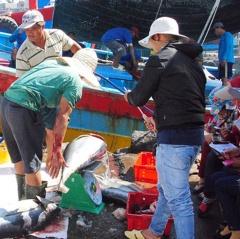 Bình Định: Đã khai thác ước đạt 83.125 tấn thủy sản