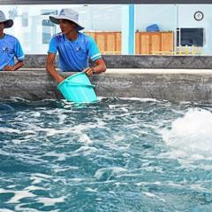 Để Ninh Thuận thành trung tâm sản xuất tôm giống của cả nước