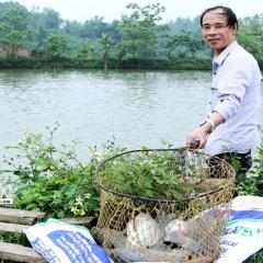 Mẹo ủ phân lợn làm thức ăn cho cá rô phi