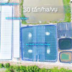 Giảm tối đa lượng nước sử dụng và tiết kiệm chi phí nuôi tôm bằng công nghệ xử lý nước Acui-T