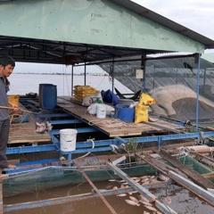 Cá nuôi trên sông Tiền chết hàng loạt là do sốc môi trường