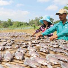 Sản xuất cầm chừng chờ giá cá nguyên liệu hạ