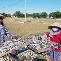 Cá nục, cá hố giá thấp, bán rất khó, vì sao?