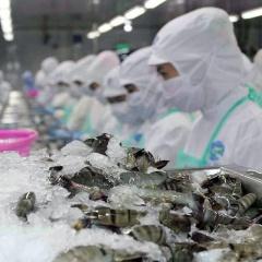 Xuất khẩu tôm Việt Nam sau khi CPTPP có hiệu lực